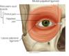 ocular palpebral.png